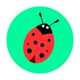 Ladybug on a green background. Vector illustration Royalty Free Stock Image