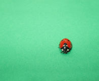 Ladybug on Green Royalty Free Stock Image