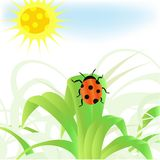 Ladybug on the green grass Stock Images