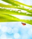 Ladybug on a green grass Stock Photos