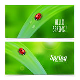 Ladybug on green grass. Stock Photos