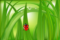 Ladybug On Green Grass. Vector. Vector Ladybug Sitting On Blade Of Green Grass Royalty Free Stock Images