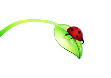 Ladybug on green leaf Royalty Free Stock Image