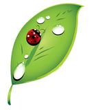 Ladybug on a green leaf Stock Photo