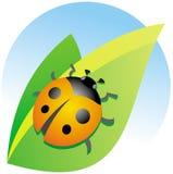 Ladybug on a green leaf Royalty Free Stock Photo