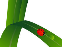 Ladybug on a green leaf with a drop of water. Stock Photography