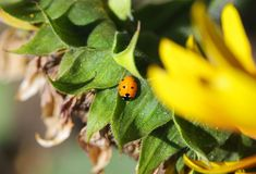 Ladybug on green leaf. In garden Stock Photos
