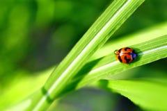 Ladybug green leaf on a sunny day stock images