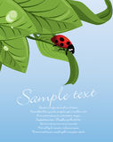 Ladybug on green leaf Royalty Free Stock Photo