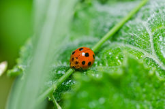Ladybug in green nature Stock Images