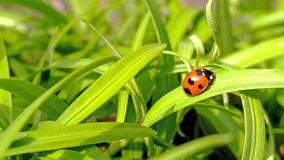 Ladybug on green nature background Royalty Free Stock Photos