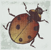 Ladybug. Grunge style Royalty Free Stock Photos