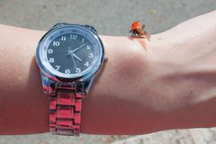 Ladybug on hand with a clock in sunny summer day stock photography