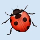 Ladybug. Hand made illustration of a ladybug Stock Images
