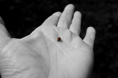 Ladybug on hand Royalty Free Stock Image