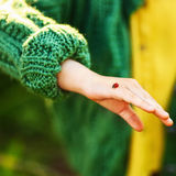 Ladybug in hands. Royalty Free Stock Images