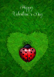 Ladybug with heart Royalty Free Stock Photos