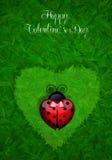 Ladybug with heart Royalty Free Stock Photos
