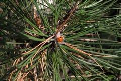 Ladybug hermoso Imágenes de archivo libres de regalías