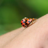 Ladybug on human skin Royalty Free Stock Photos