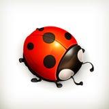 Ladybug icon Stock Photos