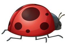 A ladybug Royalty Free Stock Photos