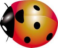 Ladybug insect Stock Photography