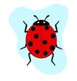 Ladybug Insect. Creepy Black Spotted Ladybug Insect Vector Illustration Royalty Free Stock Image
