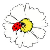 The is ladybug insect nature on daisy flower. vector illustratio Royalty Free Stock Photo