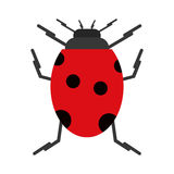 Ladybug insect nature icon Royalty Free Stock Photo