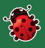 Ladybug. Isolated on color background Stock Photos