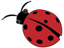 Ladybug Isolated Vector. Round friendly insect on isolated backdrop Stock Photography