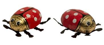 Ladybug isolated on white background. Red ladybug isolated on white background Stock Photo