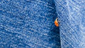 Ladybug on Jeans. A ladybug climbing on a jeans Royalty Free Stock Photo