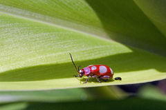 Ladybug or lady beetle in the forest Stock Photo