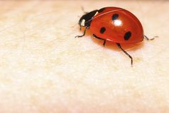 Ladybug ladybird on hand nature spring Stock Photo