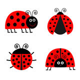 Ladybug Ladybird icon set. Baby background. Funny insect. Flat design Isolated Stock Photography