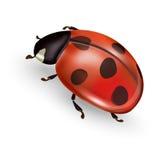 Ladybug. Ladybird illustration, ladybug icon royalty free illustration