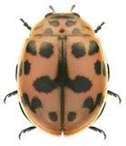 Ladybug ladybird stock photo