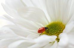 Ladybug, Ladybug! Stock Photos