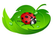 Ladybug on leaf royalty free illustration