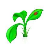 Ladybug on a leaf Stock Image