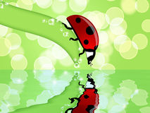 Ladybug on Leaf Looking at Water Reflection Royalty Free Stock Photos