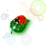 Ladybug on leaf,morning,dew,drop of water,freshness Royalty Free Stock Images