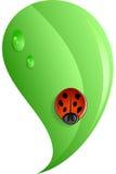 Ladybug On Leaf - Vector Illustration Royalty Free Stock Photography