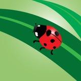 Ladybug. Ladybug on leaf  Vector illustration Stock Photo
