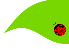 Ladybug on the leave Royalty Free Stock Photos