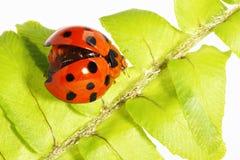 Ladybug lindo fotos de archivo