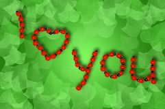 Ladybug Love. Ladybugs forming the words 'I love you' on a green background with leafs Stock Photography