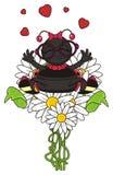 Ladybug in love Royalty Free Stock Image